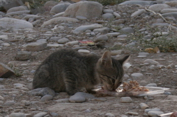 Kitten_ii_2